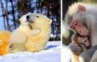 22 foto commoventi ritraggono il più grande amore che possa esistere al mondo