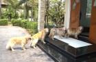 Vier Hunde warten geduldig vor der Haustür: Der Grund ist überraschend