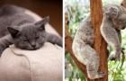 Campioni del riposo: ecco quanto dormono i più pigri del regno animale