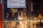 De redding van 21 honden die werden achtergelaten in een gesloten winkel