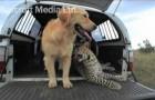 Cane e Leopardo migliori amici