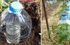 Ecco una tecnica ingegnosa per irrigare le piante risparmiando molta acqua