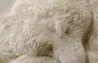 Sembra un orso polare che dorme... ma il materiale di cui è fatto vi sorprenderà