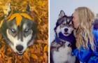 Lei viveva una relazione violenta:ciò che ha fatto il suo husky le ha cambiato la vita