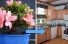 Ad ogni ambiente la sua pianta: 10 specie che purificano l'aria degli spazi domestici