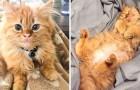 Depuis le jour où il a été adopté, ce chat n'a jamais cessé de sourire