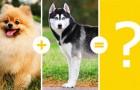 14 zuckersüße Welpen, die aus der Kreuzung zweier Hunderassen hervorgegangen sind