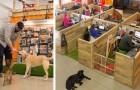 Ramener ses chiens sur son lieu de travail? Voici le bureau le plus