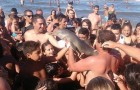 Een dolfijnenjong komt op een onwaarschijnlijke manier aan zijn einde vanwege een selfie