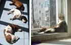 23 photos d'animaux qui aiment le chaud plus que tout autre chose