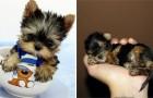 Cuccioli così piccoli da stare nel palmo di una mano: impossibile non amarli
