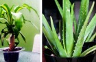 Pollution domestique: voici les 12 plantes qui amélioreront l'air de votre maison