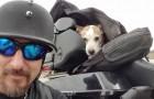 Un motociclista adotta un co-pilota speciale dopo aver assistito al suo abbandono