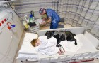 Questo cane non abbandona il suo amico nemmeno in ospedale: ecco cosa significa amare