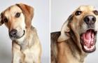 19 zwerfhonden op zoek naar een nieuwe baasje poseren voor een unieke fotoshoot