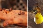 Dacht u dat honing alleen wordt geproduceerd door bijen? Wij presenteren u de