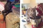 Pris en flagrant délit : 18 animaux adorables qui n'avaient pas prévu l'arrivée de leur maître...