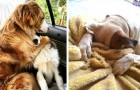 Le stupende reazioni di 12 animali che hanno appena realizzato di essere dal veterinario