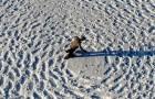 Deze man heeft honderden voetstappen achtergelaten in de sneeuw: als de voetstappen vanaf een hoogte worden bekeken, is het resultaat spectaculair!