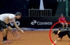 Några hundar från gatan blir förda till en tennisbana... Orsaken kommer att få er att le