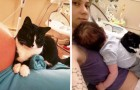 Deze kat beschermde haar kleine mensenvriend al voordat het kind was geboren