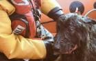 In mare da 5 giorni, lo salvano all'ultimo secondo: ecco la storia del cane