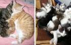 20 foto di gatti che sanno benissimo cosa vuol dire essere una famiglia
