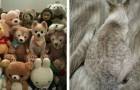 18 grappige foto's van dieren die meesters in camouflage zijn