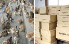 L'Isola dei Gatti si rivolge ad Internet per un'emergenza cibo: la risposta supera le aspettative