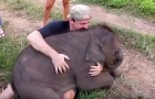 A baby elephant literally falls in love in this tourist --- An unrepeatable experience!