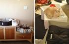 15 propriétaires de chats qui ont fait un achat qui n'a pas plu!