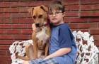 Una pit bull viene adottata dalla famiglia di un bambino autistico: l'effetto è sorprendente