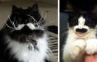 13 gatti nati con dei baffi perfetti: impossibile prenderli sul serio!