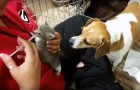 When the woman tries to feed the orphaned kittens -- Look at what the dog does!