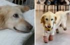 Questo cane ha vissuto una vita di orrori: eccolo mentre gioca per la prima volta