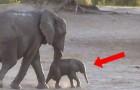 Ils filment des éléphants qui prennent leur bain: ce que fait le petit va vous faire sourire!