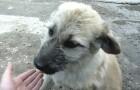 Un uomo trova un cane abbandonato: guardate cosa fa quando gli si avvicina...