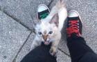 Un ragazzo incontra un gattino in strada: poco dopo dovrà fare una scelta importantissima
