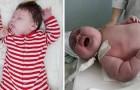 Cuccioli extra-large: ecco alcuni tra i neonati più grandi che siano mai venuti al mondo