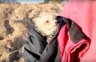Un couple était à la recherche de pierres précieuses... Mais au final il a trouvé BEAUCOUP plus!