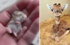 22 Tierbabies die wirklich jeden grauen Tag erhellen