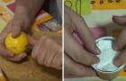 Learn how to plant lemon seeds to grow you own lemon tree!