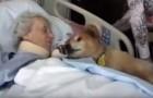 Deze hond is 19 jaar oud als hij deze vrouw ontmoet... ontroerend!