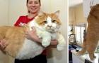 16 gatti extra large in carne ed ossa di cui vi innamorerete a prima vista