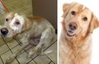 I miracoli dell'adozione: queste commoventi foto prima/dopo valgono più di mille campagne