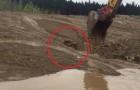 Un operaio vede qualcosa muoversi nel fango: ciò che riesce a fare è stupefacente!
