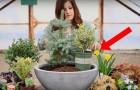 Una joven pone diferentes plantas en una maceta...El resultado final es absolutamente magico