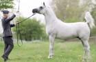 Un uomo e il suo cavallo si guardano negli occhi: le immagini che seguono sono un incanto
