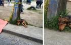 Een hond weigert het lichaam van zijn overleden vriend te verlaten...