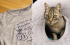 Voici comment construire une couchette pour chats en utilisant un vieux t-shirt